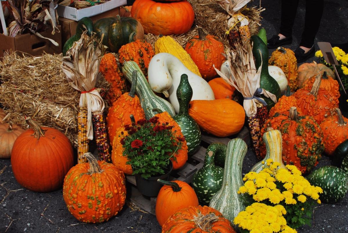 Fall Farmers Market Haul